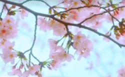 ネットフリックス,ドラマ(フォロワーズ)第7話Favarite(お気に入り)